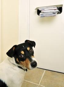 feedback dog