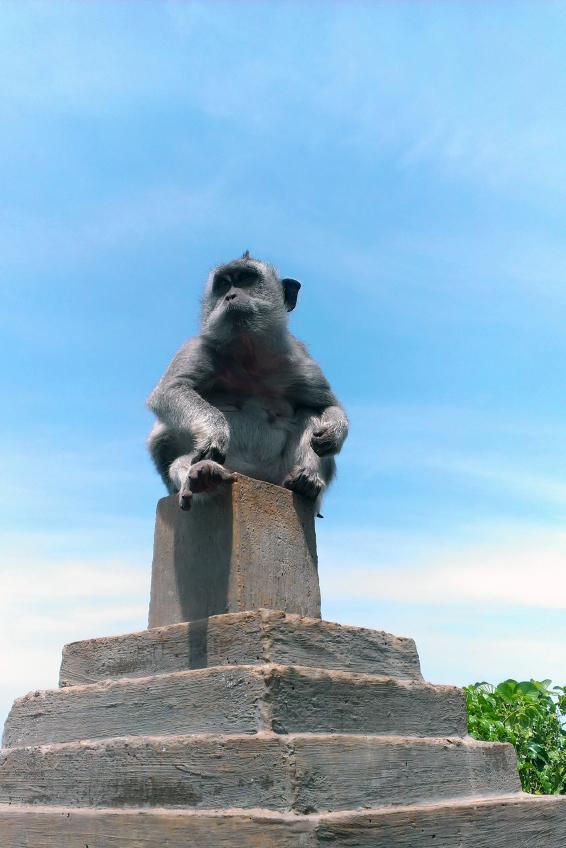 Monkey sitting on a pedestal. Chinese 2016 New Year symbol