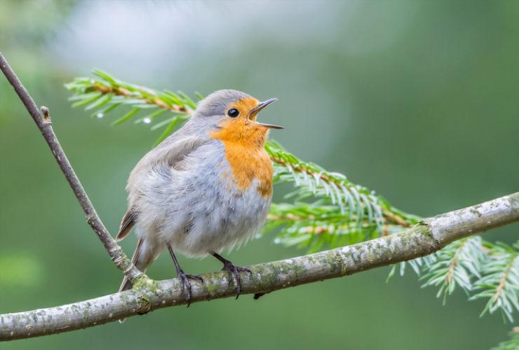 Sklover Working Wisdom Singing Bird
