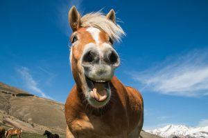 Sklover Working Wisdom Gift Horse