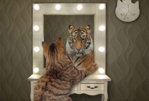 Sklover Working Wisdom Cat in Mirror