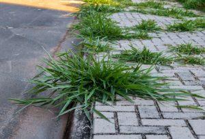 Sklover Working Wisdom Grass in Sidewalk